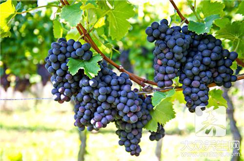 葡萄是热性的还是凉性的